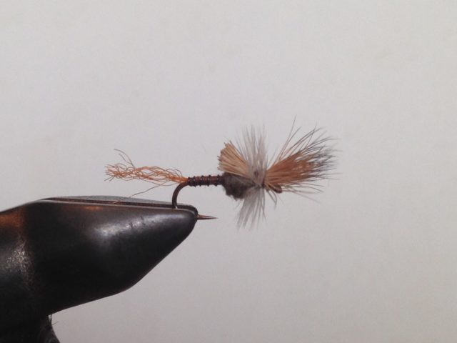 Estes Park Fly Fishing Guides Choice for Flies of the Week.